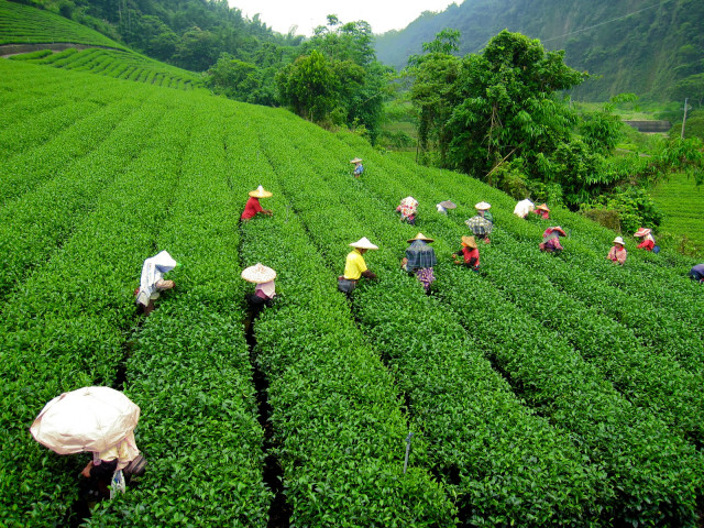 BOOK DARJEELING PACKAGE TOUR FROM MEILLEUR HOLIDAYS